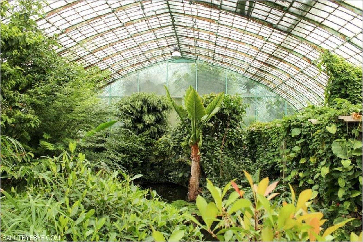 A l'intérieur du palmarium de la grande serre