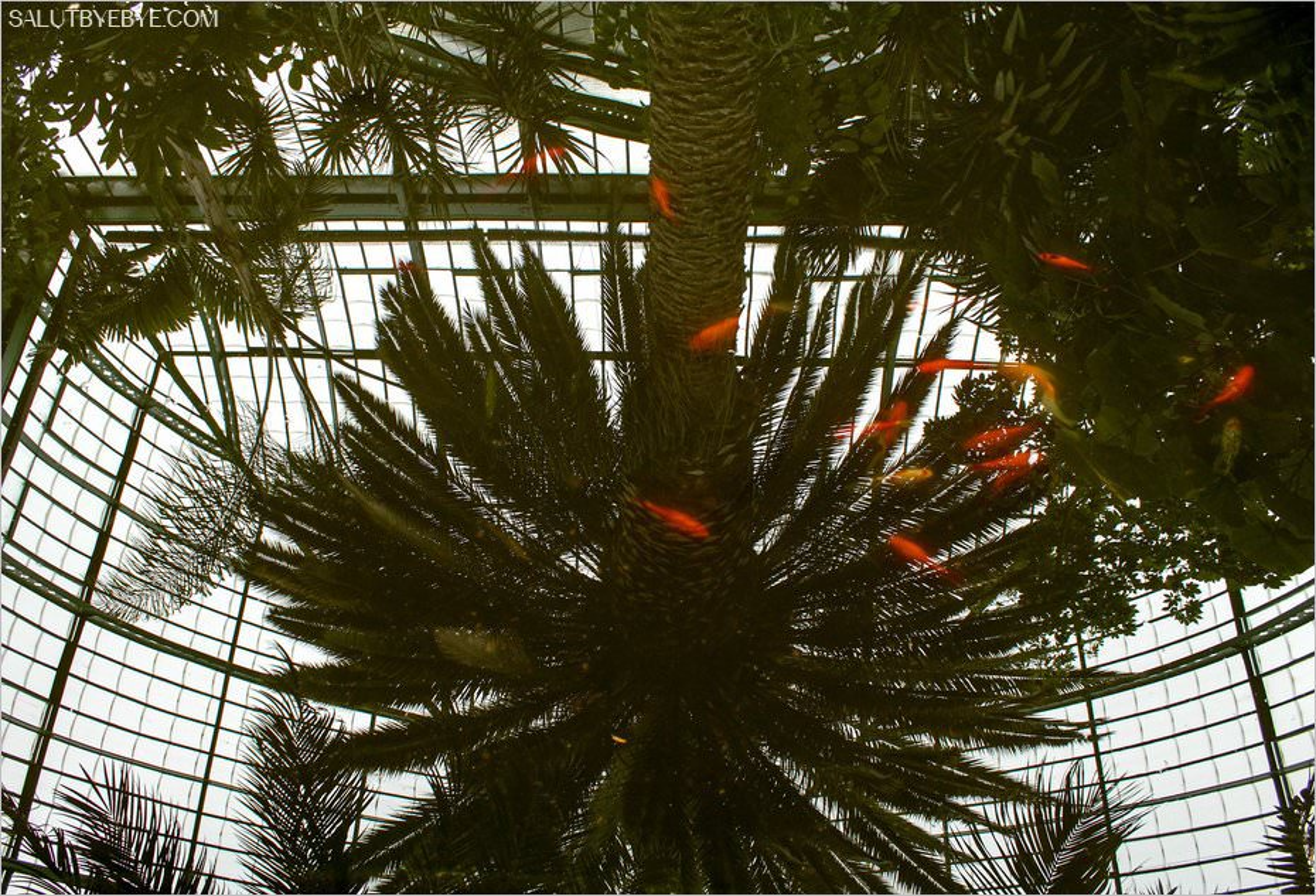 Un bassin avec le reflet des palmiers
