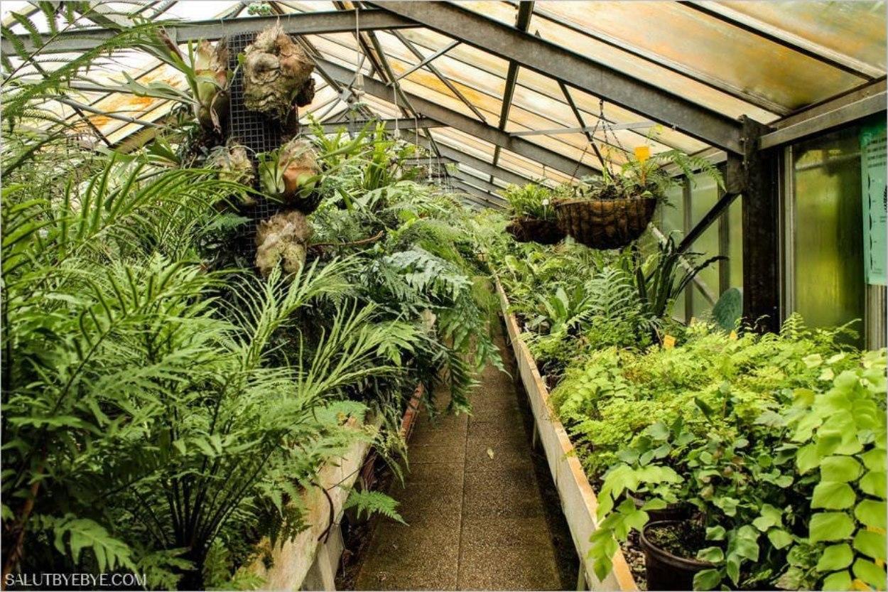 Les serres chaudes du jardin des serres d'Auteuil