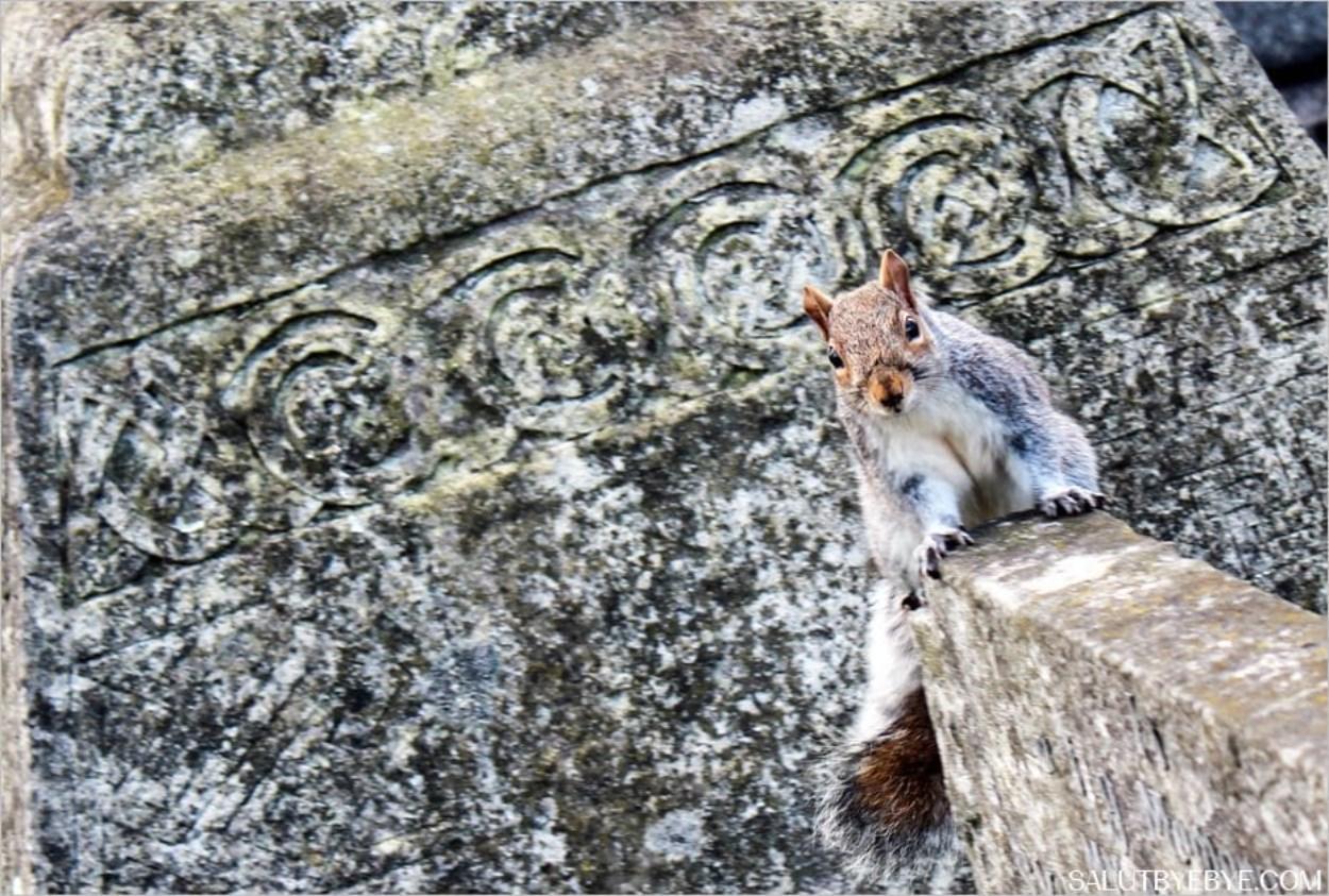 Un écureuil au cimetière de West Brompton