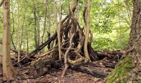 Le bois de Boulogne à l'automne