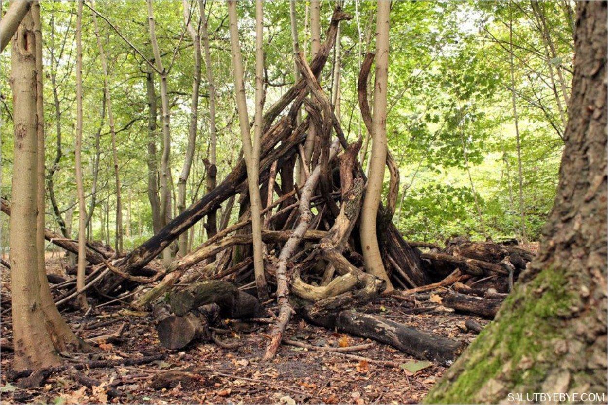 La Clairiere Bois De Boulogne - Bois de Boulogne photos d'automne dans les bois