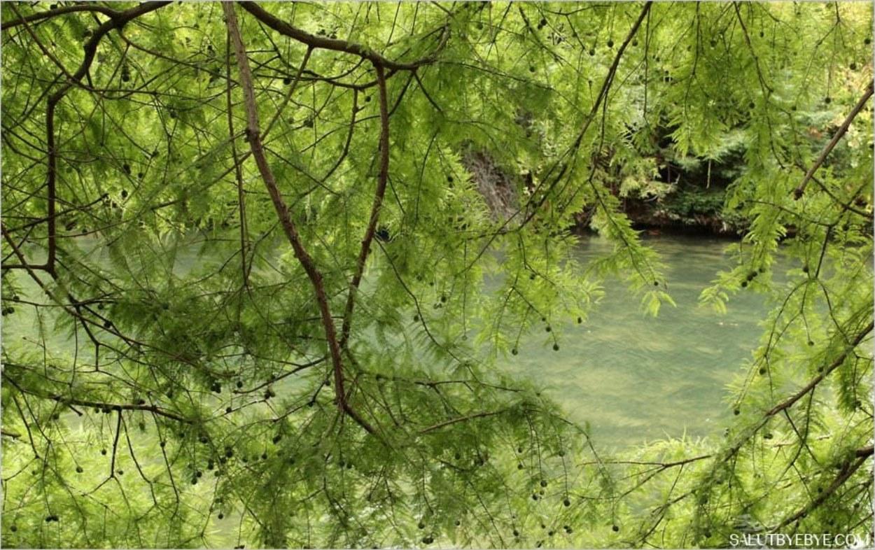 Sur les rives du Lac Inférieur