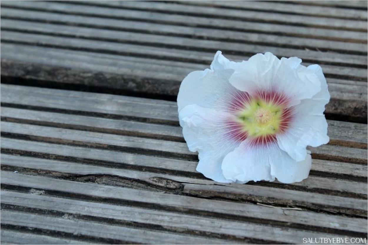 Fleurs sur les bords de Marne
