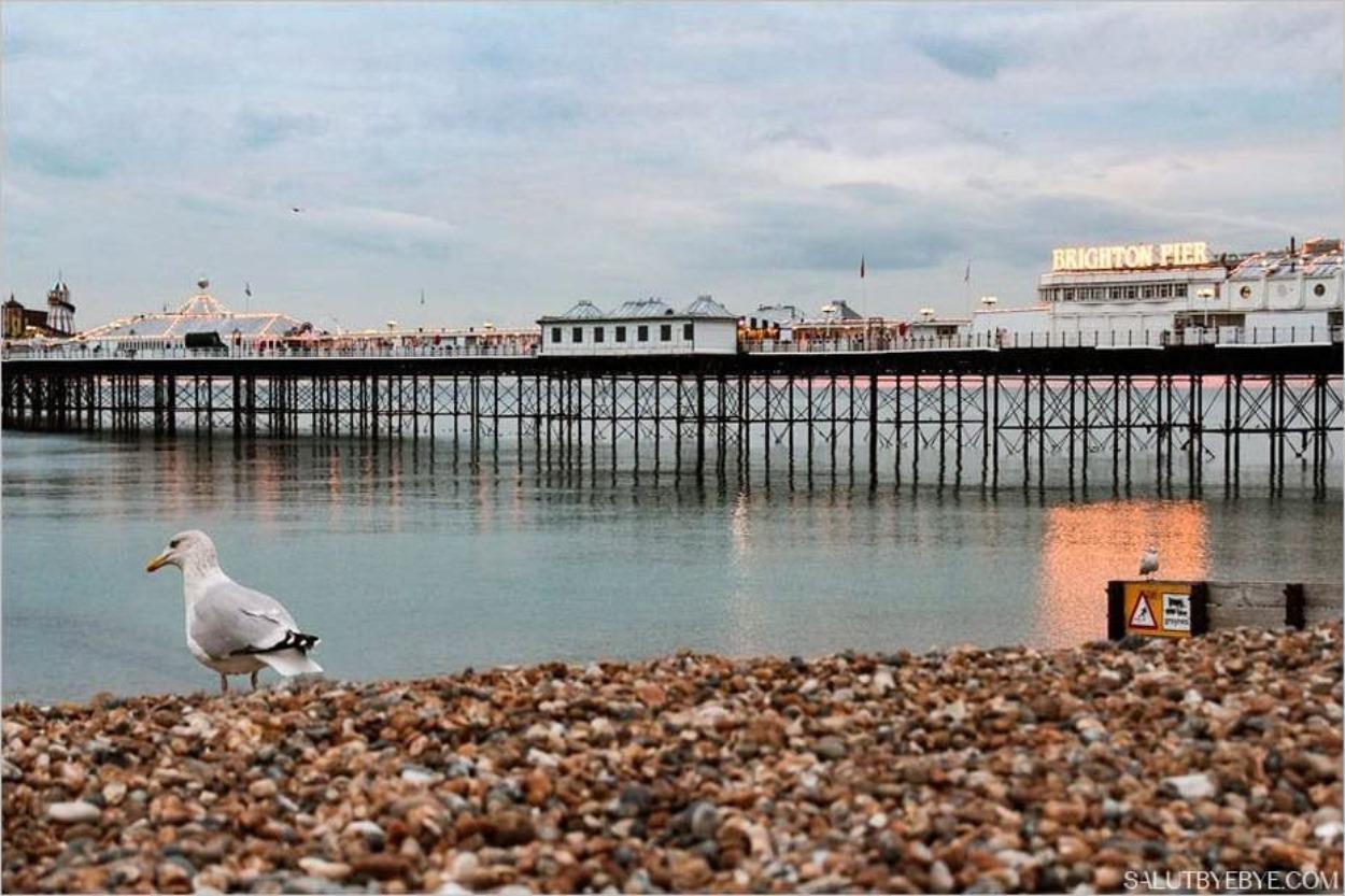 Une mouette sur la plage près du Brighton Pier