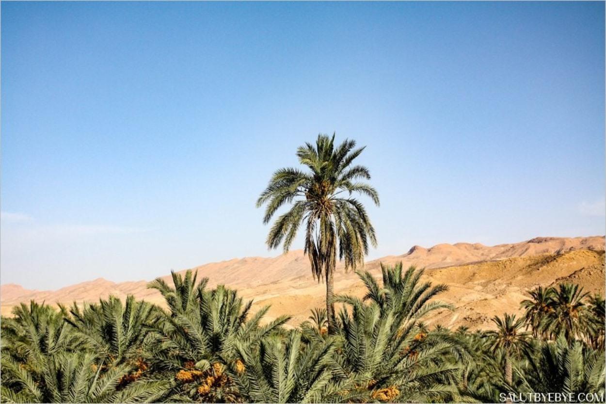 Un palmier et un paysage exotique
