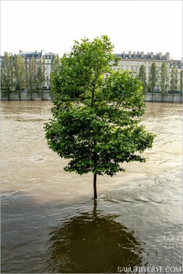 Crue de la Seine 2016 à Paris