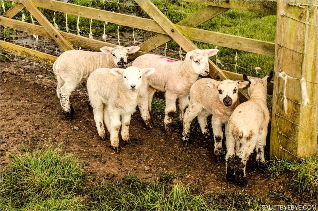 Animaux à Seven Sisters en Angleterre