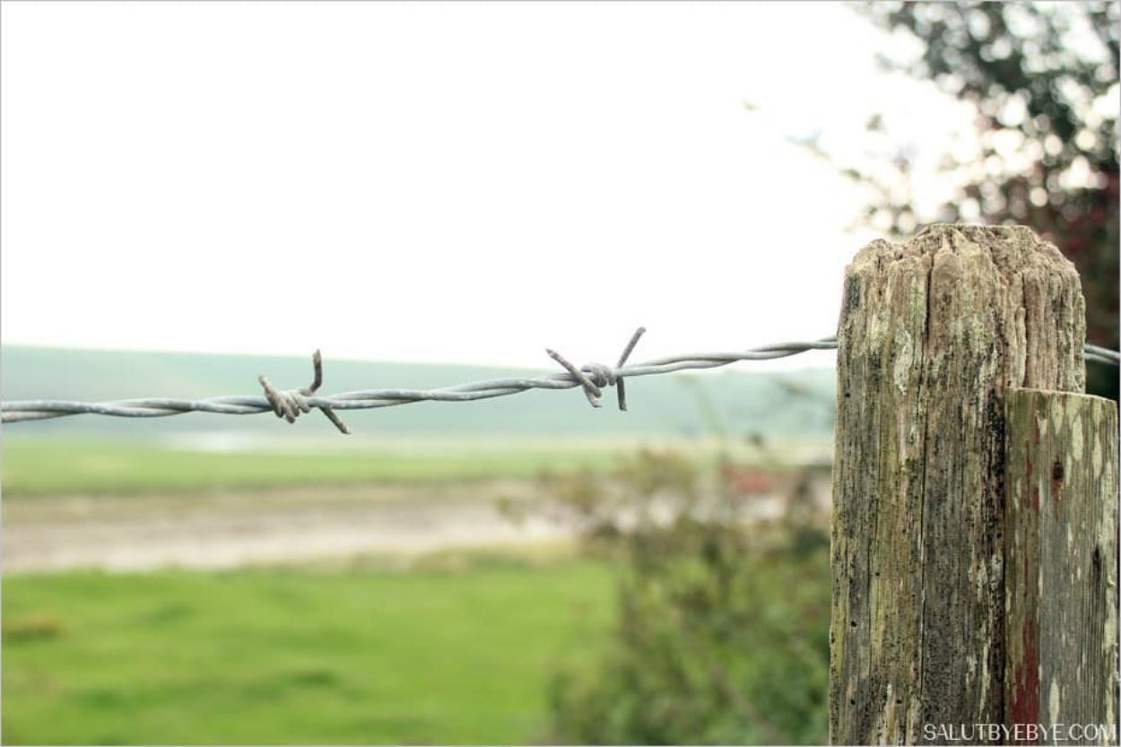 Le parc naturel de Seven Sisters dans le Sussex
