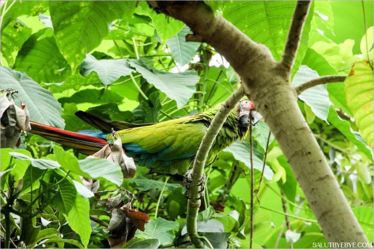 Un perroquet au zoo de Vincennes