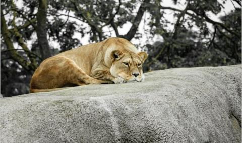 J'ai visité le zoo de Vincennes… et voici mon avis !