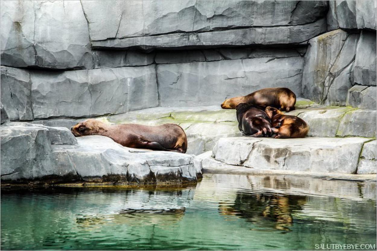 Les otaries du Parc Zoologique de Paris