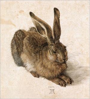 Le lièvre d'Albrecht Dürer