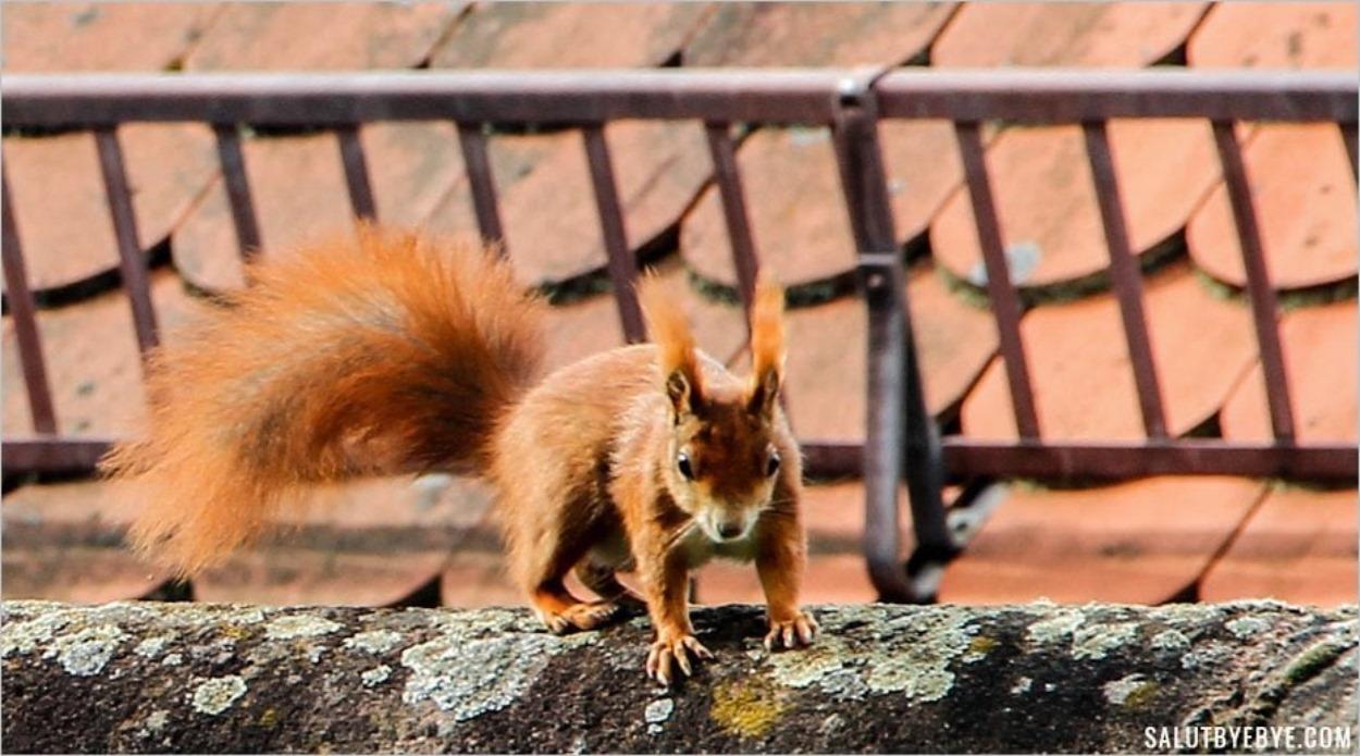 Un écureuil pris sur le vif