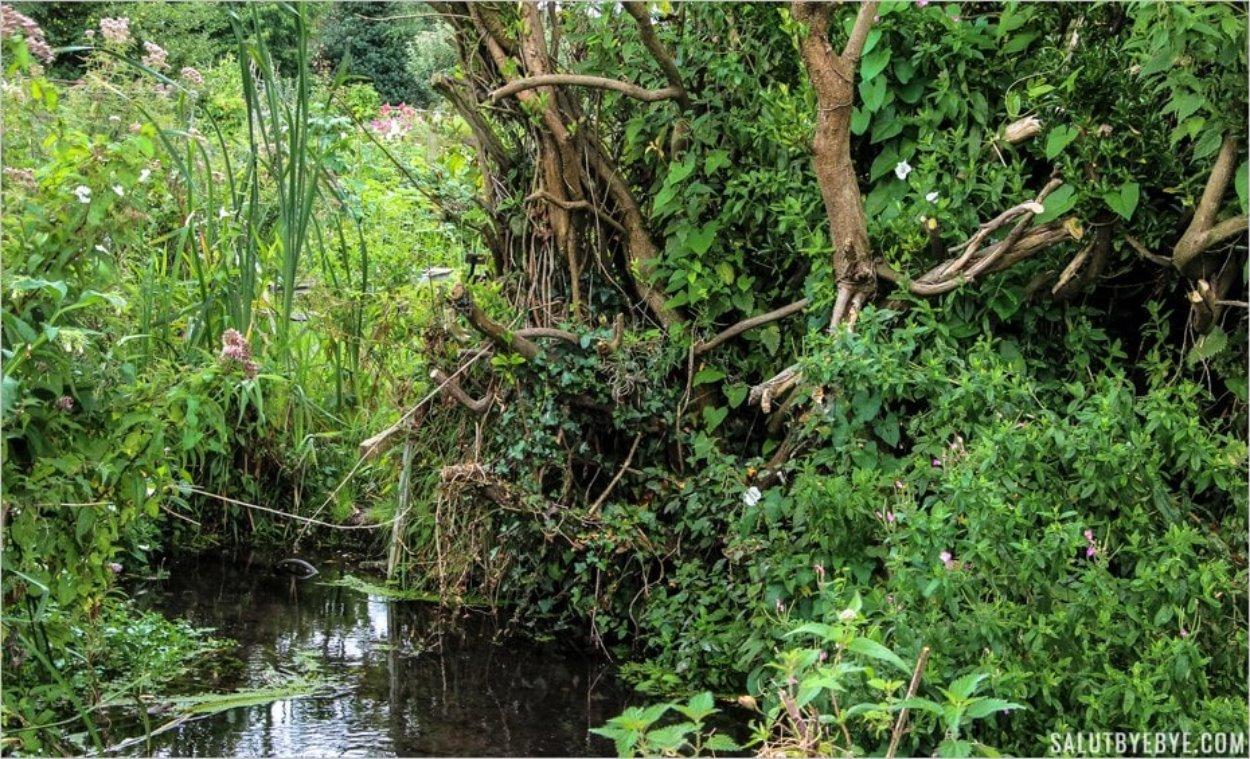 Le fouillis végétal des Water Meadows de Winchester