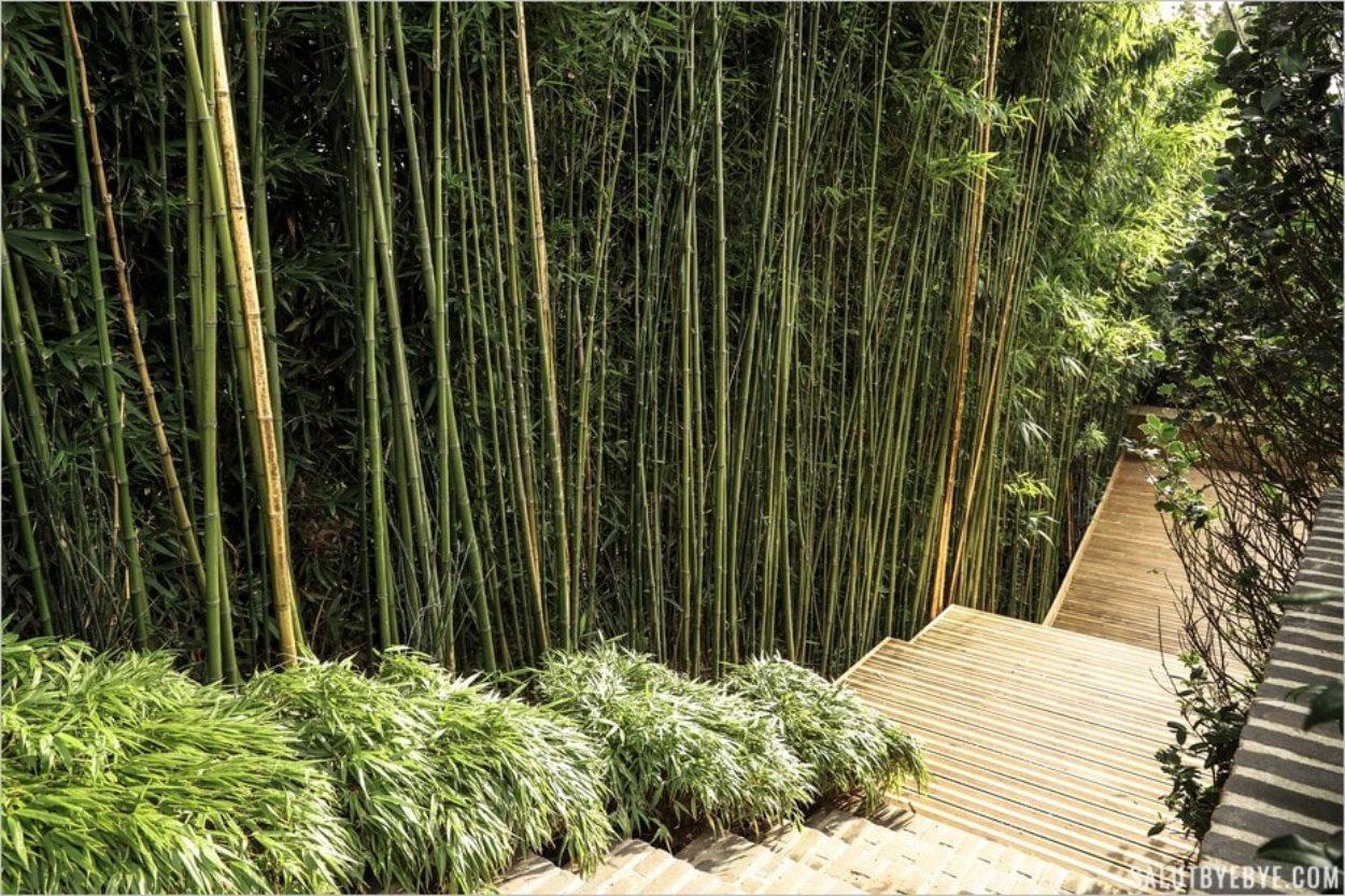 Bambous dans les Jardins d'Etretat