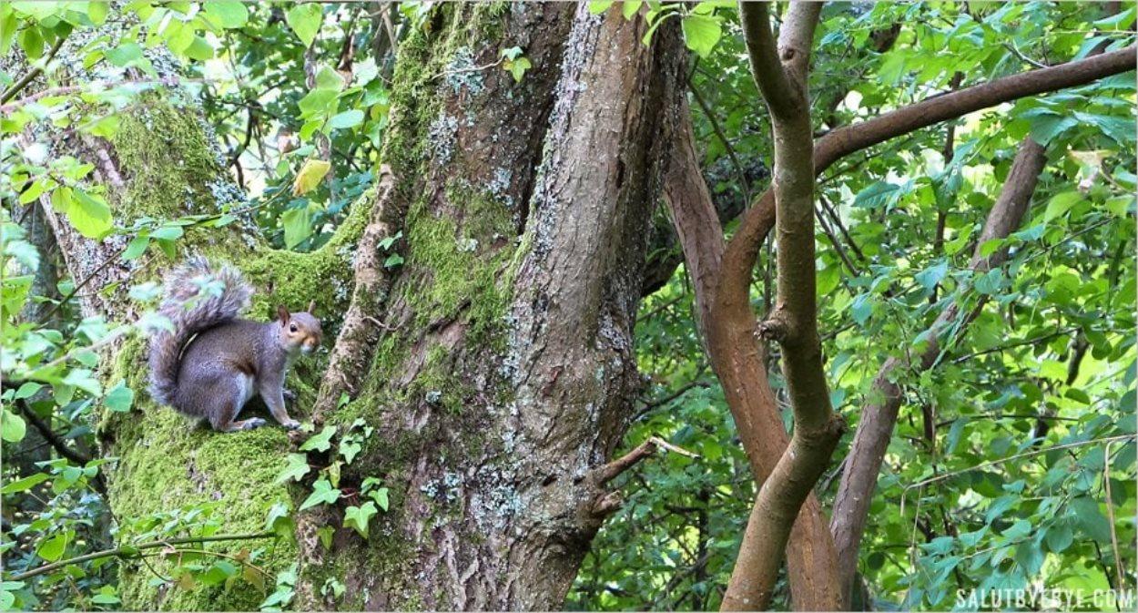 Un écureuil pose pour la photo !
