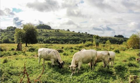 Week-end dans la campagne anglaise : Winnall Moors et les Water Meadows à Winchester