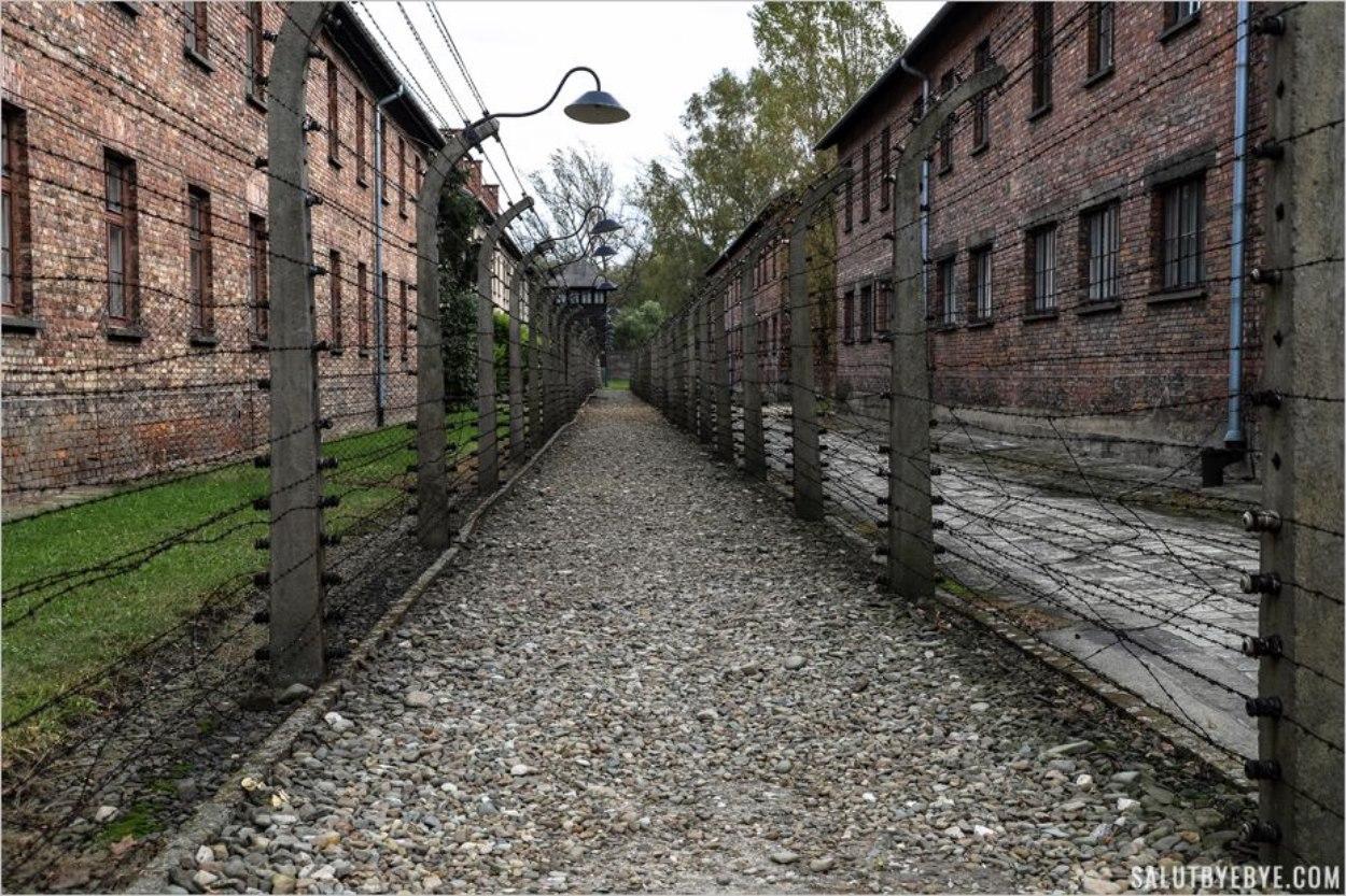 Entre deux rangées de barbelés - Musée d'Auschwitz I