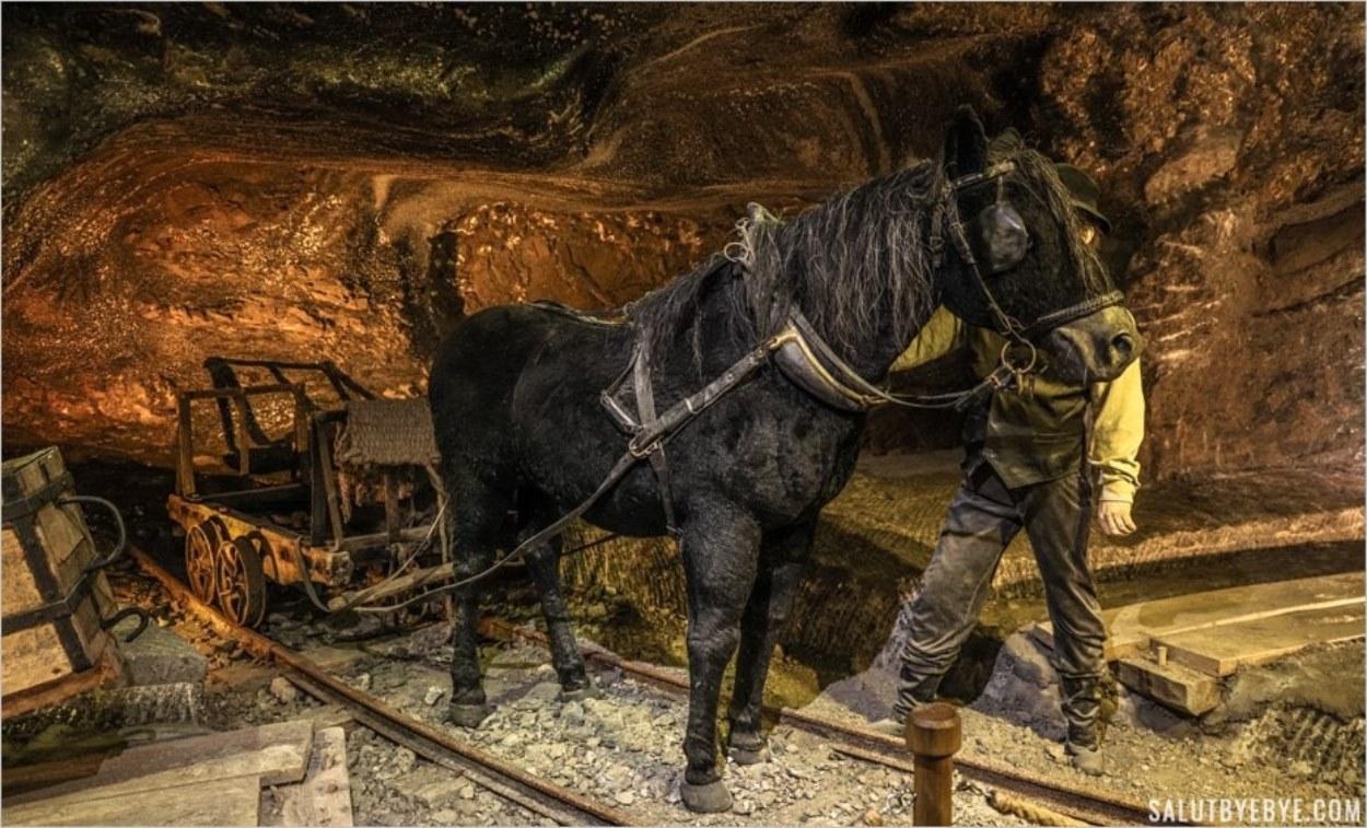 Les chevaux, ouvriers dans la mine de sel de Wieliczka