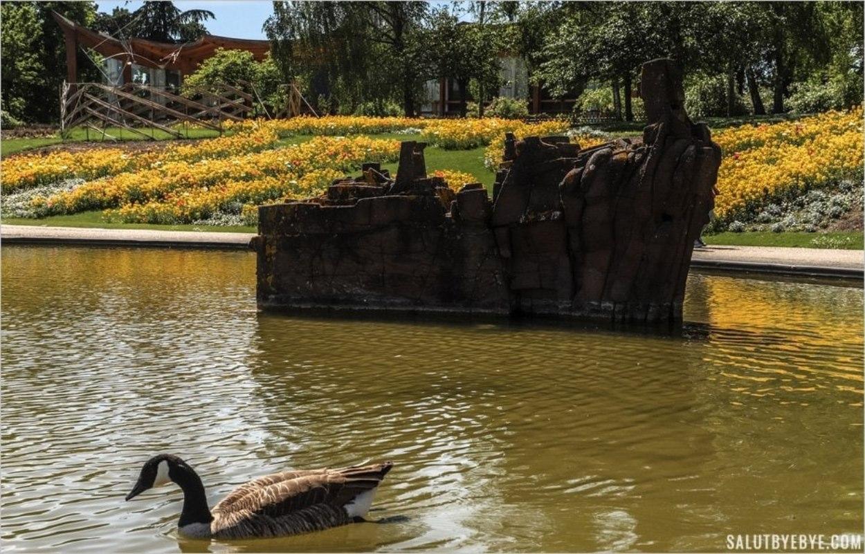 Bernache du Canada sur le lac du Parc Floral