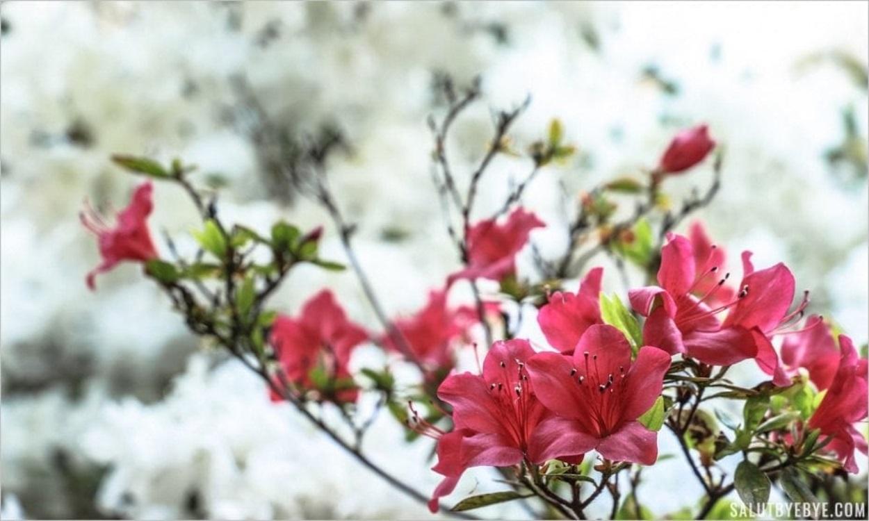 Parc Floral de Vincennes à Paris