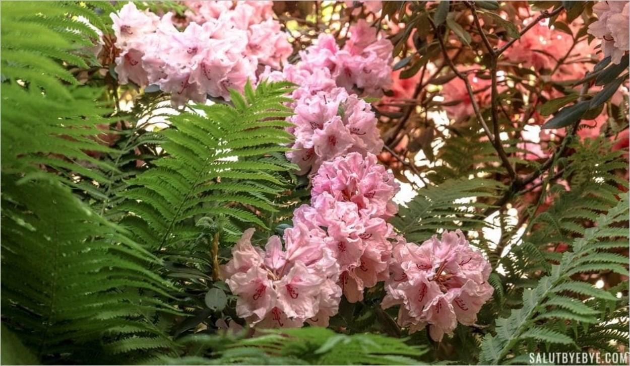Les sublimes fleurs du Parc floral de Paris