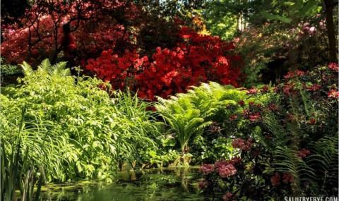 Le Parc Floral de Vincennes, pause nature à l'Est de Paris
