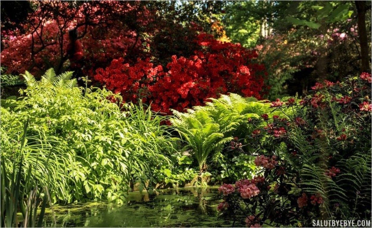 La beauté du Parc floral de Vincennes