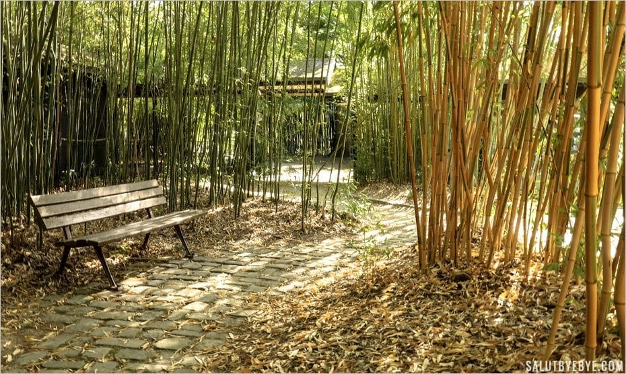 Au milieu des bambous dans un parc à Paris