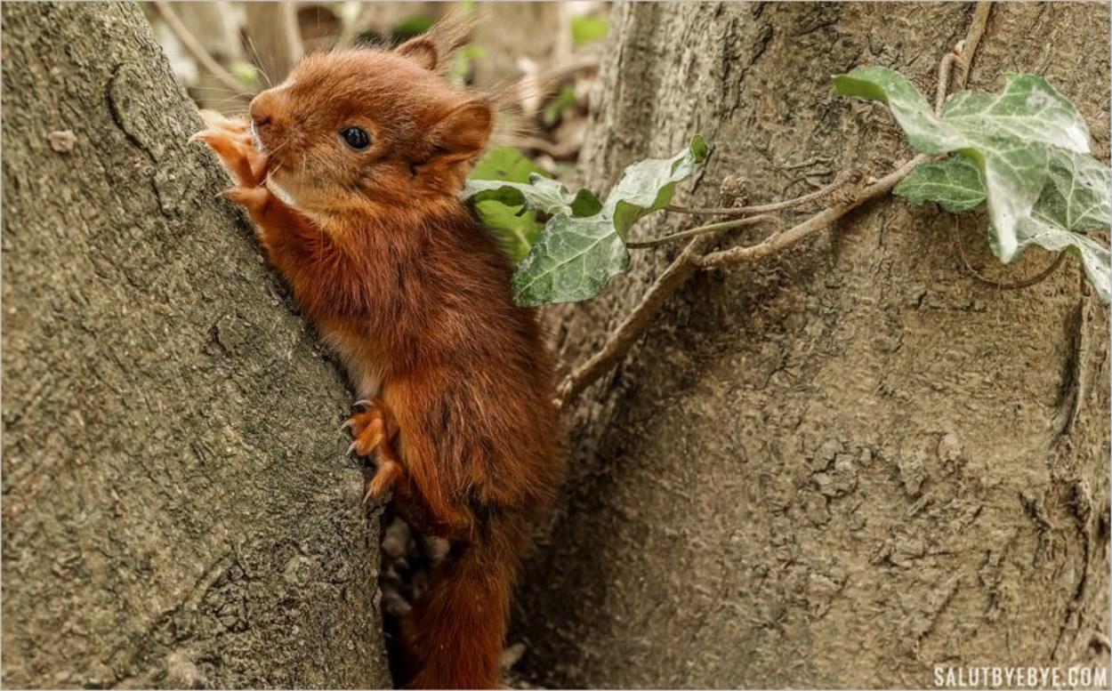Bébé écureuil près des îles de Créteil