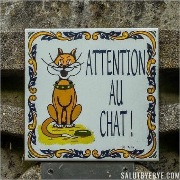 Pancarte Attention au Chat sur l'île Sainte-Catherine