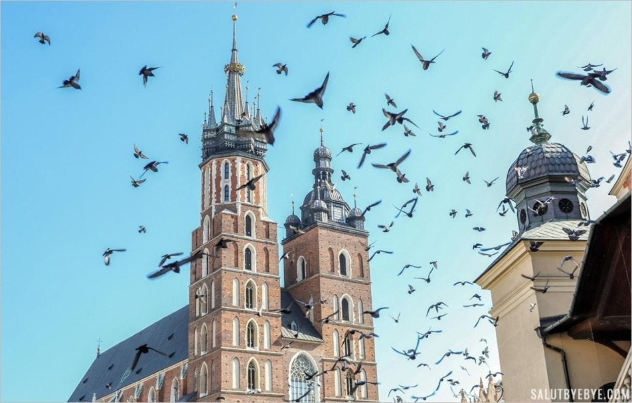Envol de pigeons devant la basilique Sainte-Marie de Cracovie