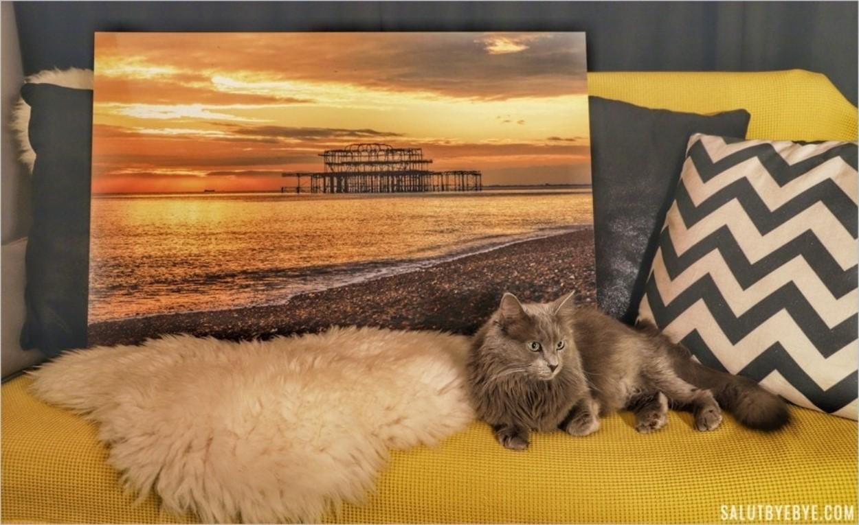 Offrir un tirage photo... pour plaire à son chat !