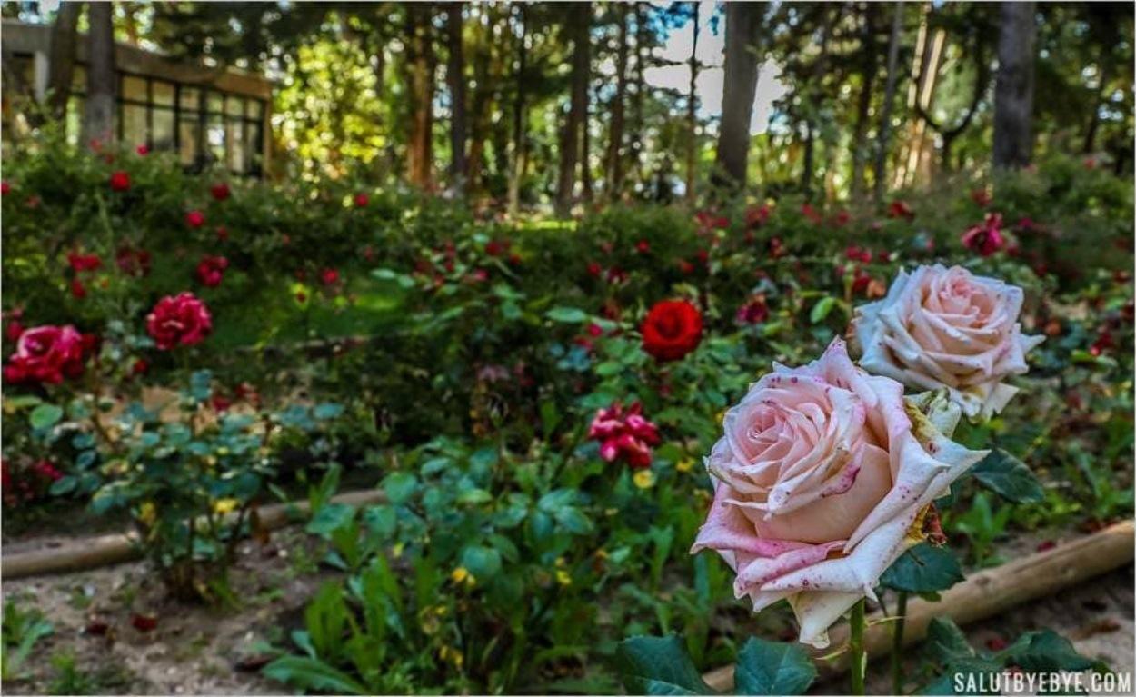 Roseraie du parc Marechal Carmona à Cascais