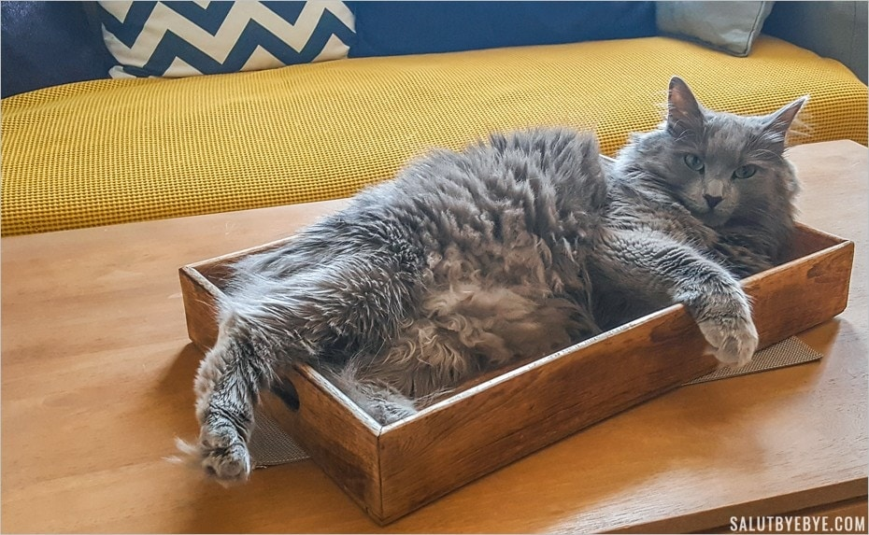 Un chat sur un plateau