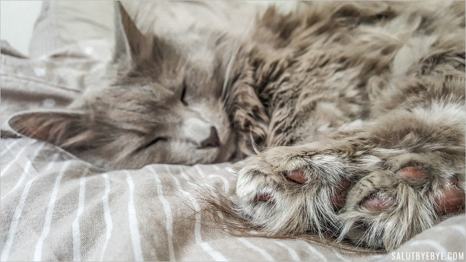 Le sommeil, grande passion du chat d'appartement !