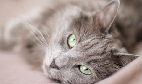 Comment faire garder son chat pendant ses vacances ?