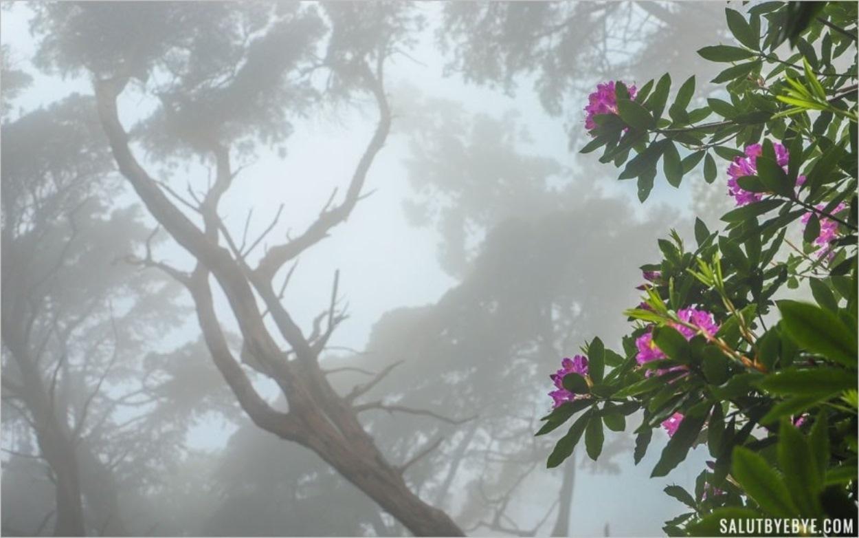 Brouillard dans les jardins du Pena Palace à Sintra