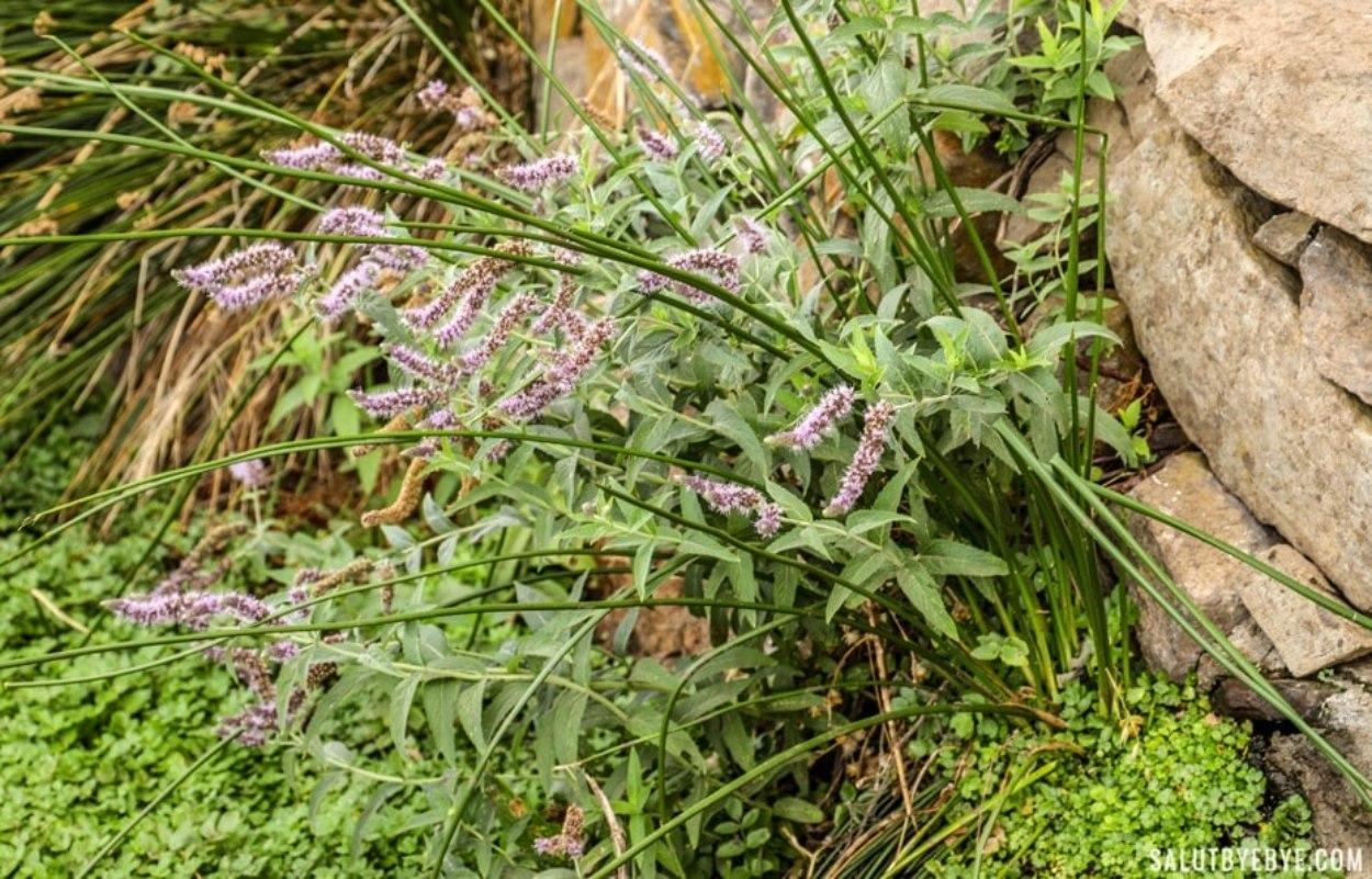 Plante hydratante à La Gomera