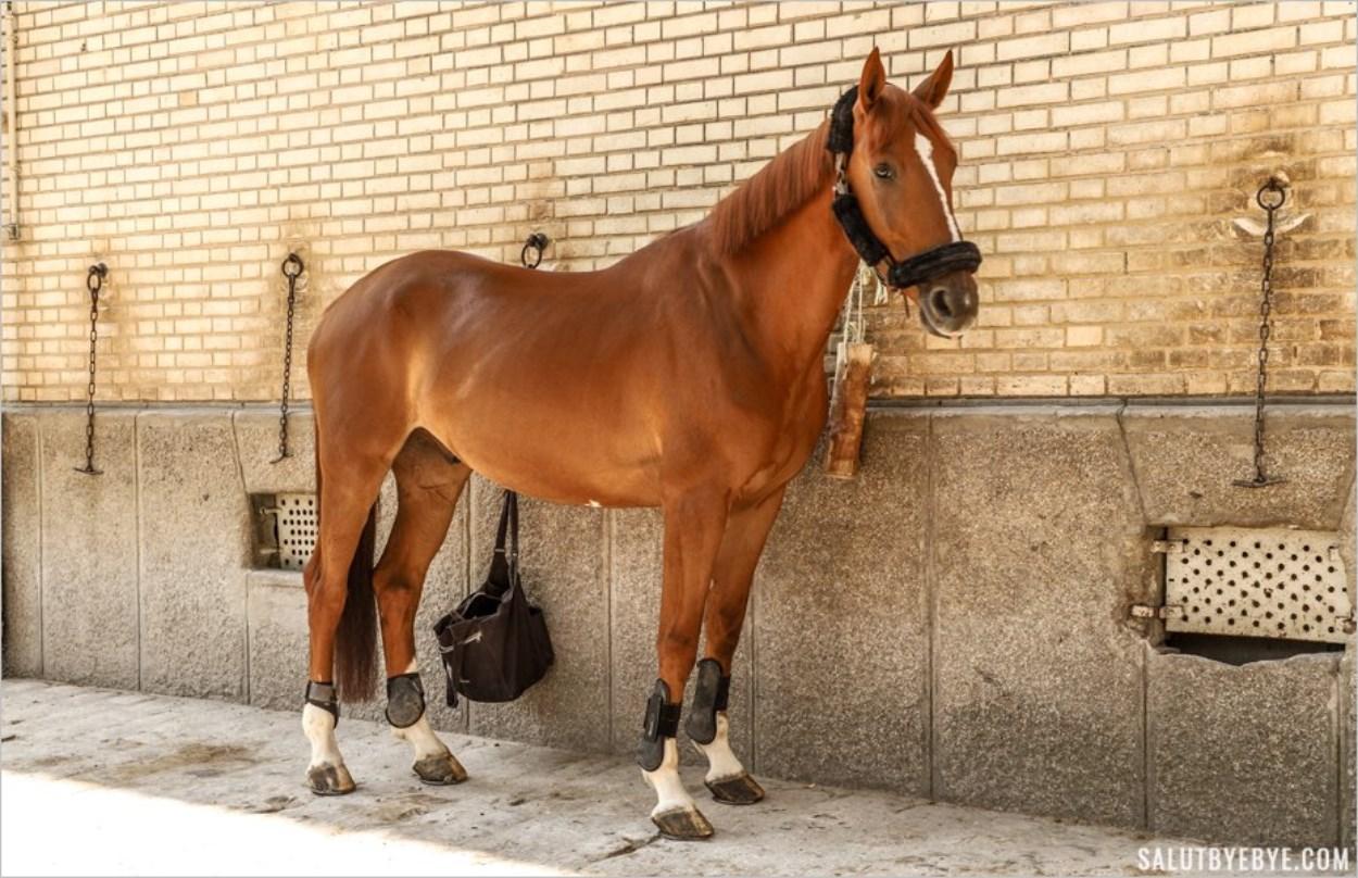 Un cheval de la Garde Républicaine