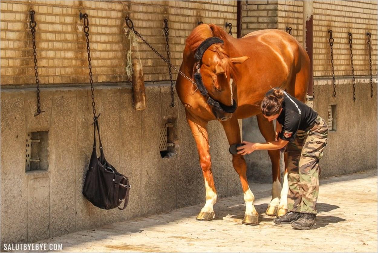 Moment de complicité avec son cheval - Quartier des Célestins
