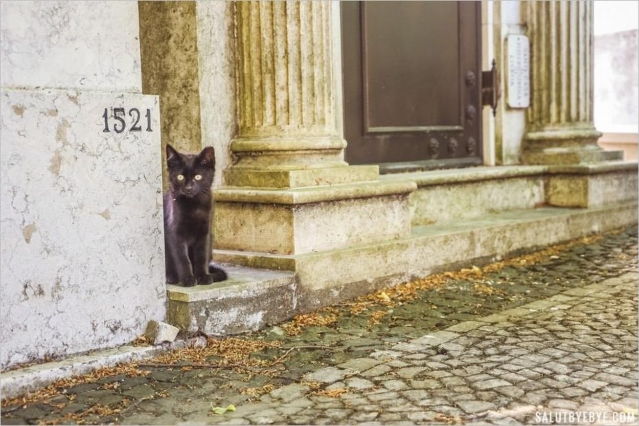 Un chat noir dans un cimetière à Lisbonne au Portugal