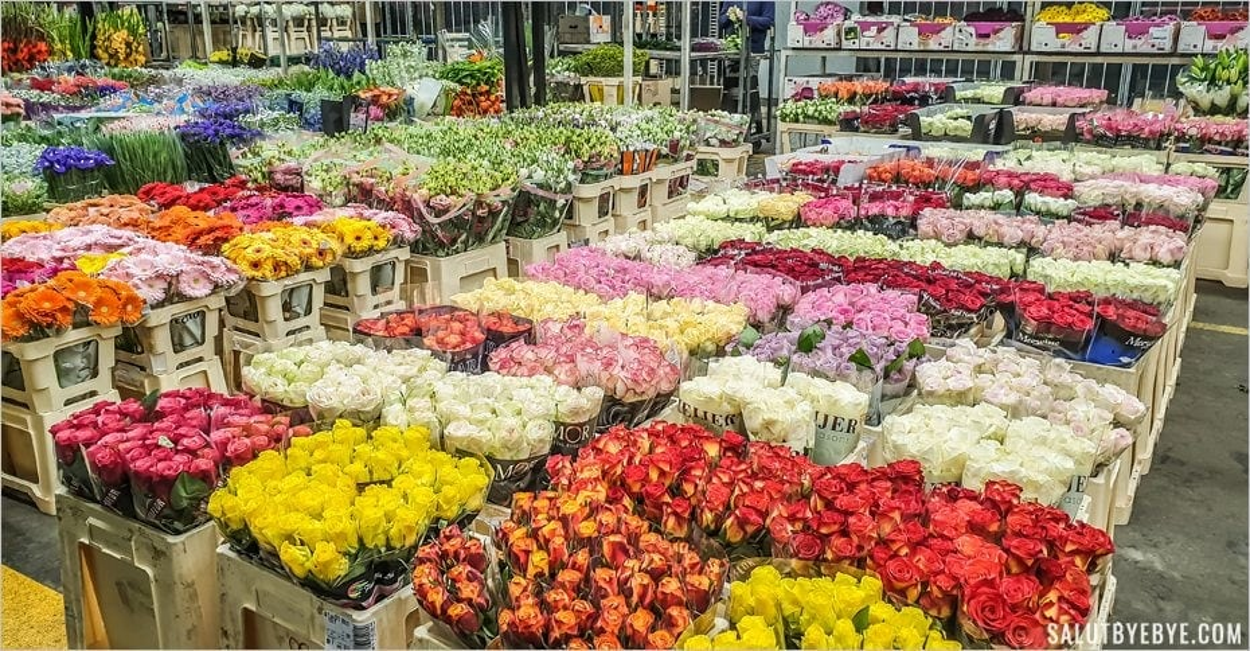 Visite du marché de Rungis : les fleurs