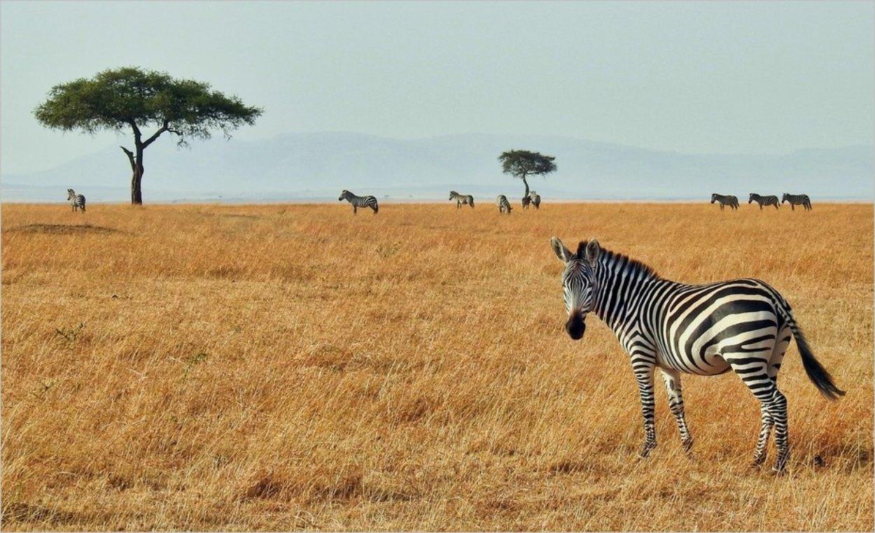 Réserve du Masai Mara au Kenya