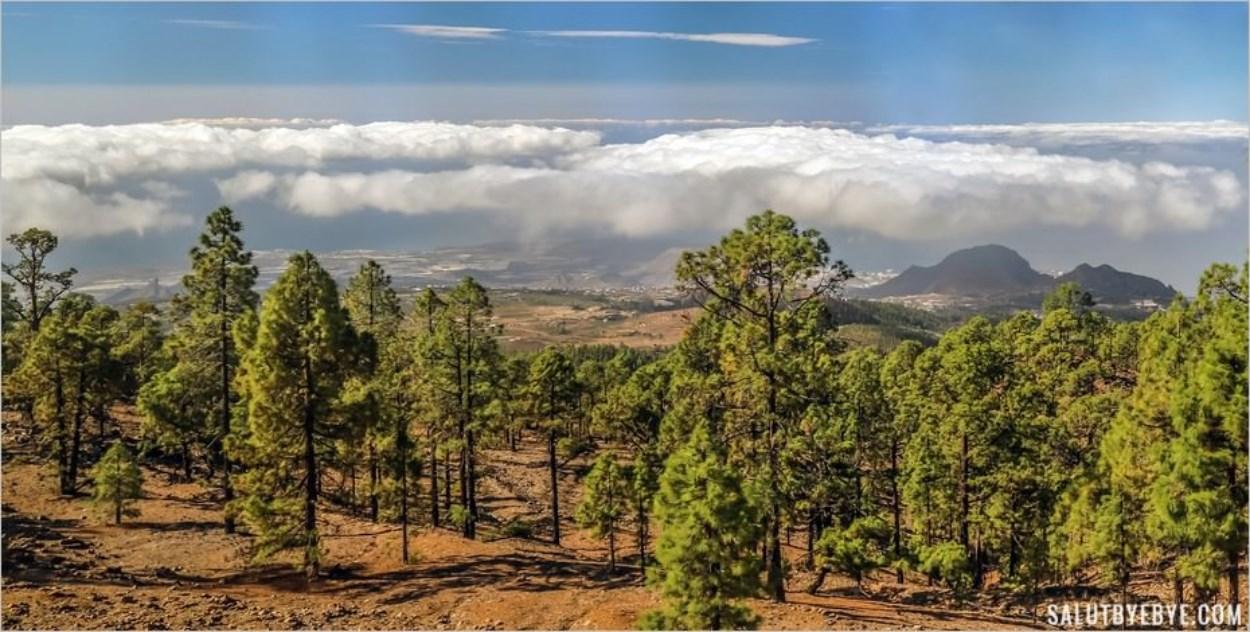 Monter dans les nuages parmi les pins canariens