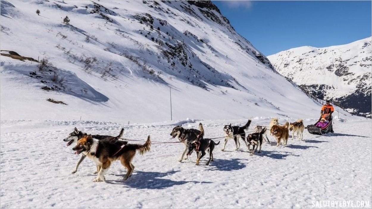 Balade en chien de traîneau à Val Cenis : un grand moment de complicité sous la neige