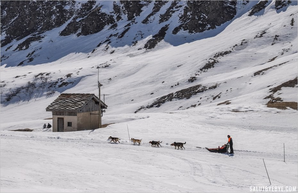 Faire un baptême de chien de traîneau à Val Cenis