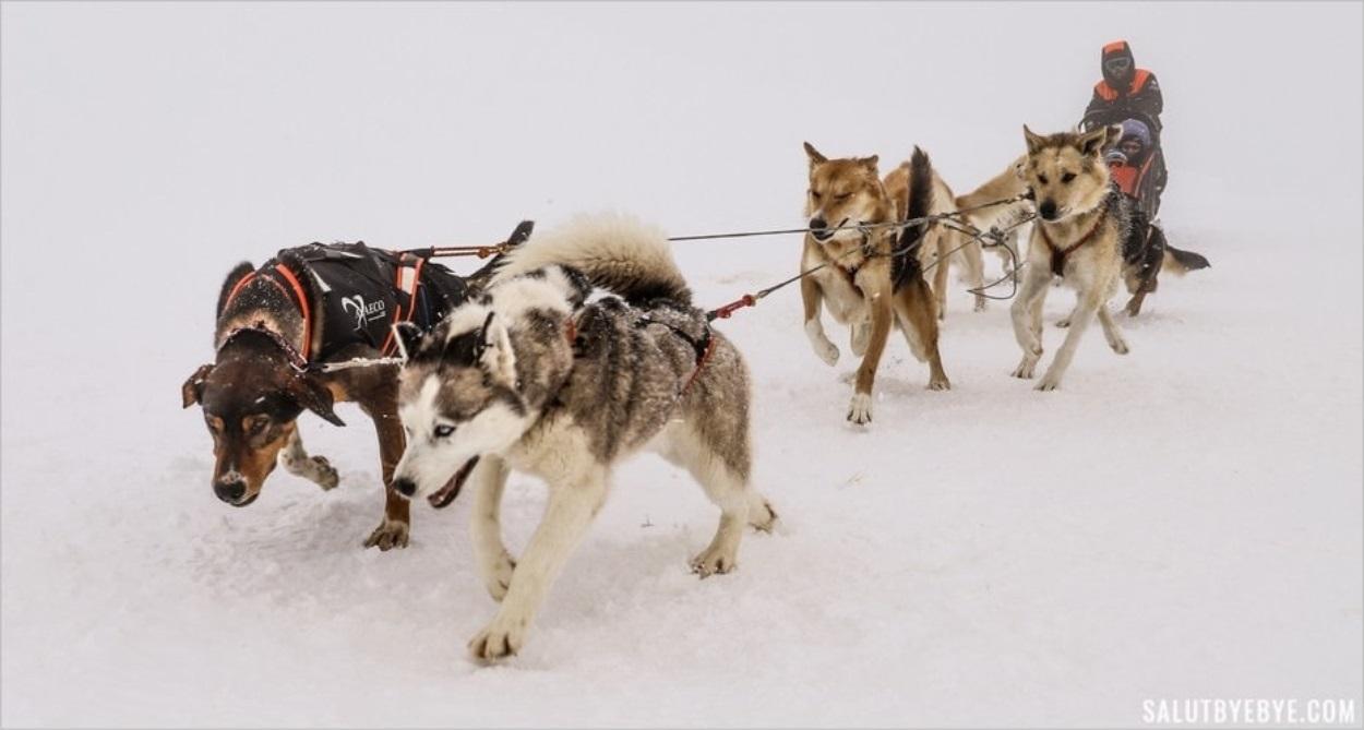 Le traîneau prend le départ sous la neige