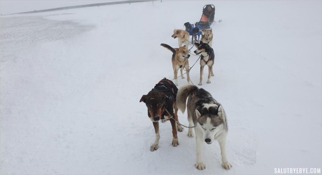 Avec les chiens de Husky Adventure à Val Cenis en Haute-Maurienne